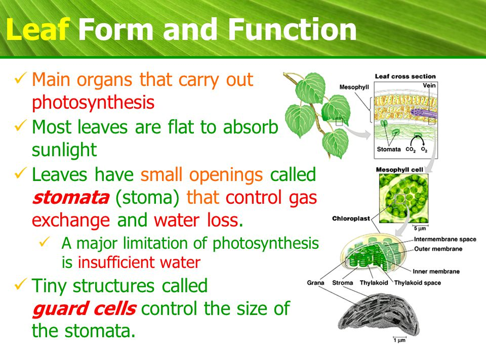 plant form and function pdf