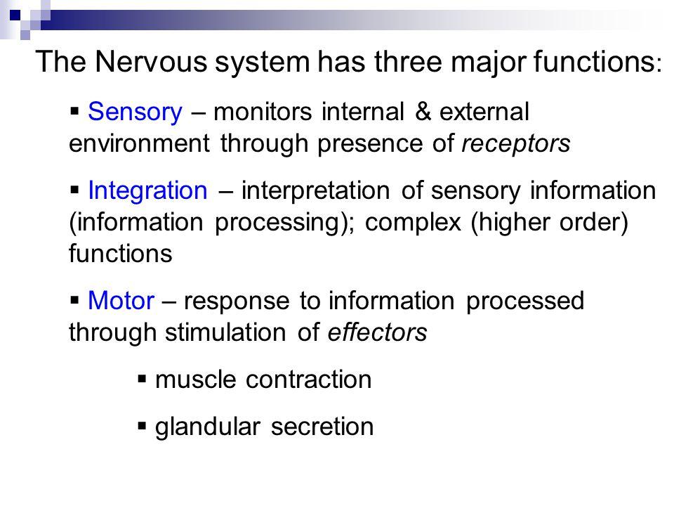 The Nervous System Nervous Tissue Chapter Ppt Download