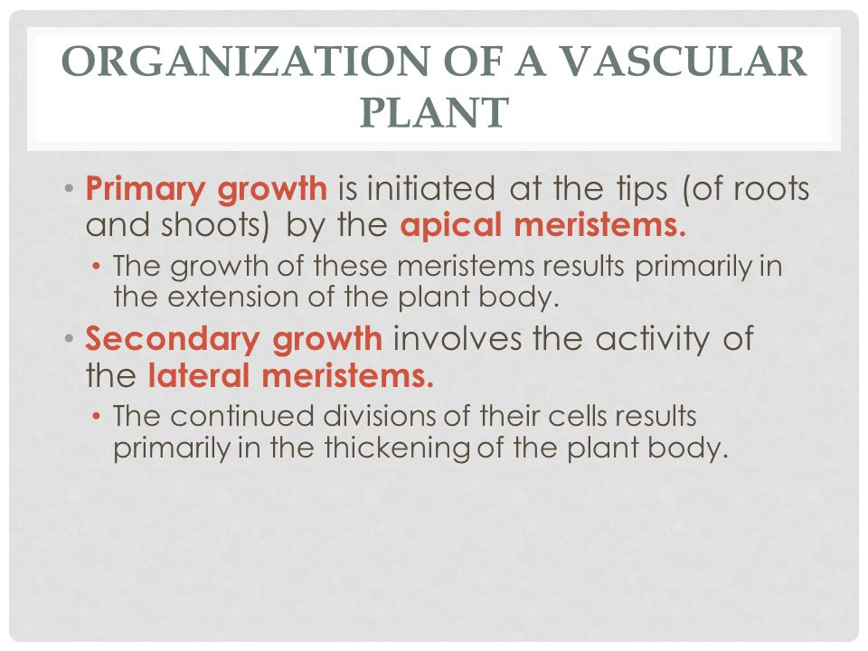 organization of the plant body and View organization of the plant body from department biology 20 at university of the philippines diliman organization of the plant body external organization complex.