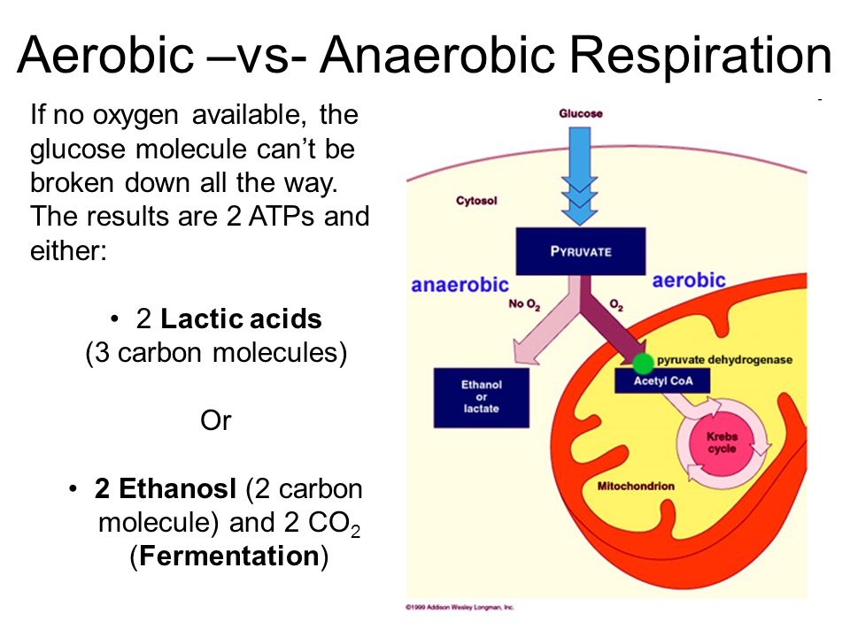 biochemistry anaerobic respiration Anaerobic respiration choice in e coli up vote 2 down vote favorite under anaerobic conditions e coli has two options to generate atp: fermentation (substrate-level phosphorylation), and respiration (proton gradient, chemisomotic phosphorylation.