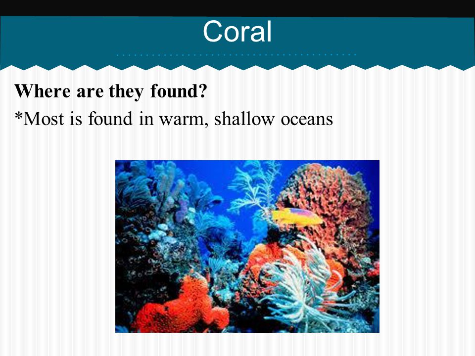 Coral Where are they found *Most is found in warm, shallow oceans