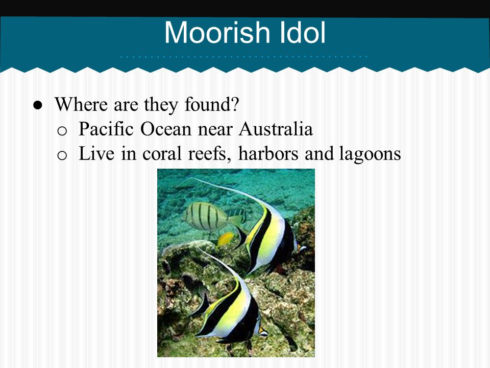 Moorish Idol Where are they found Pacific Ocean near Australia