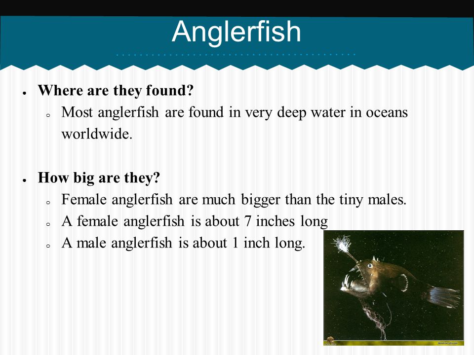 Anglerfish Where are they found