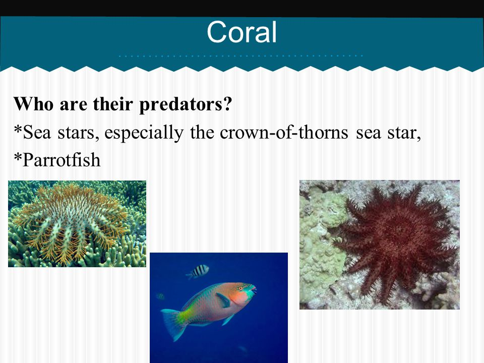 Coral Who are their predators