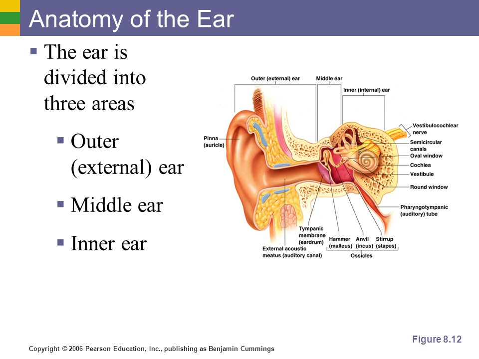 a description of the human ear as divided into three structural parts This simply means that human ear is divided into three parts – the outer ear, the middle ear and the inner ear each part has separate functions.