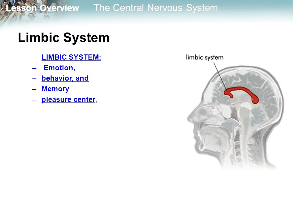 Limbic System LIMBIC SYSTEM: Emotion, behavior, and Memory