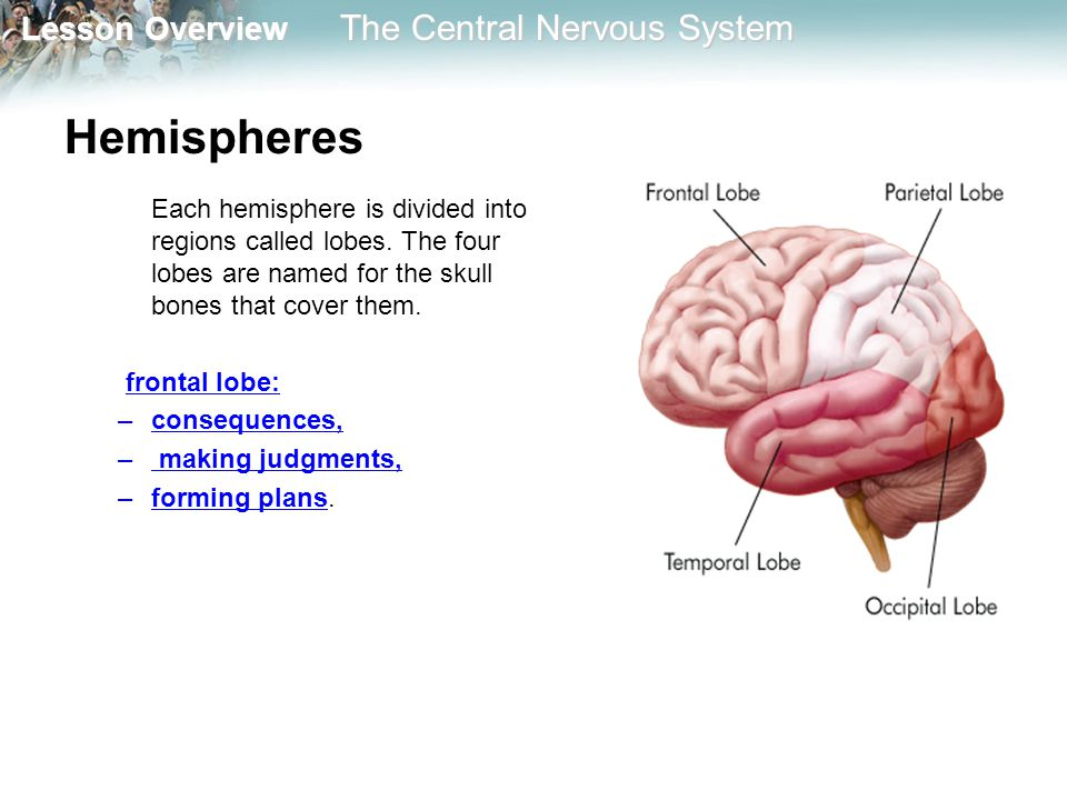 Hemispheres Each hemisphere is divided into regions called lobes. The four lobes are named for the skull bones that cover them.