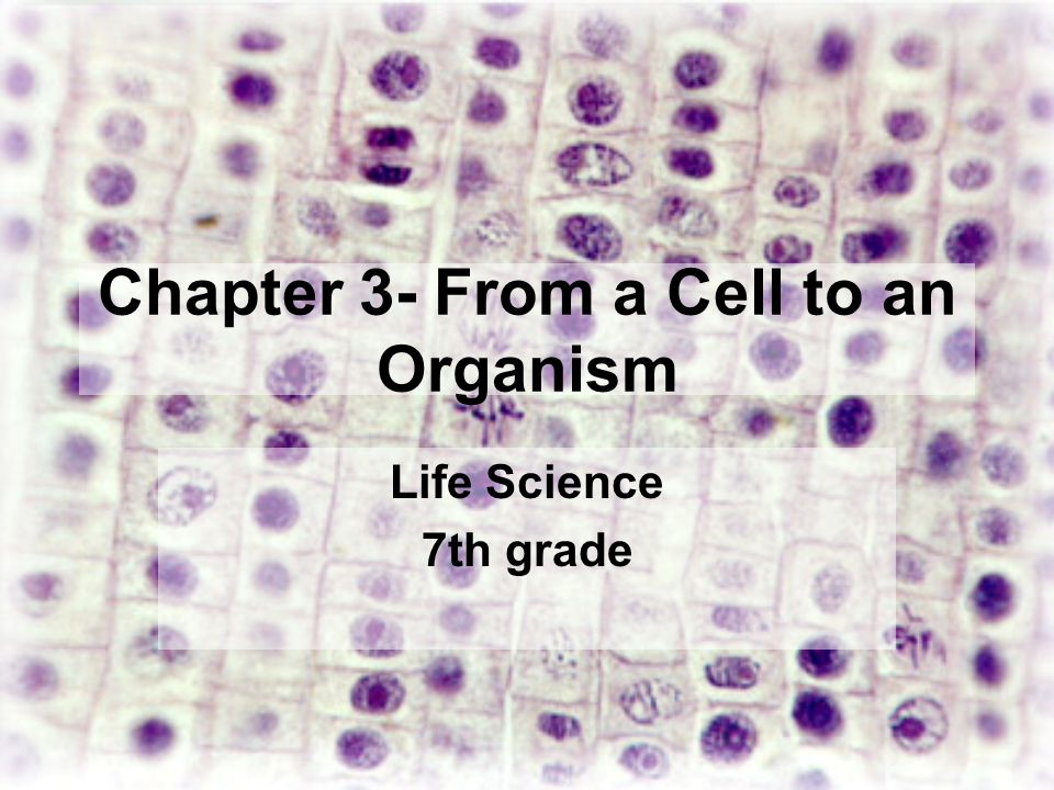 Chapter 3 From A Cell To An Organism