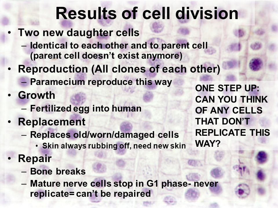 Best 102 The Process Of Cell Division Worksheet Answers Pictures ...