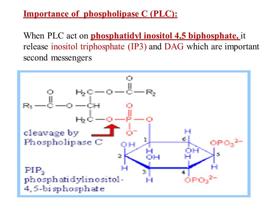 Importance of phospholipase C (PLC):