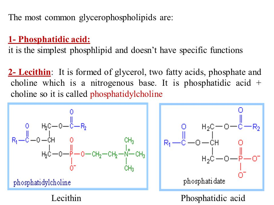 The most common glycerophospholipids are: