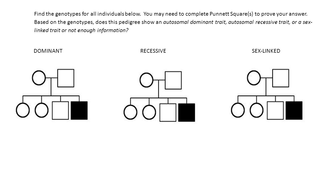 How Toplete The Punnett Square By Isabel Allende 17 5 29 The Punnett Square  21 Find