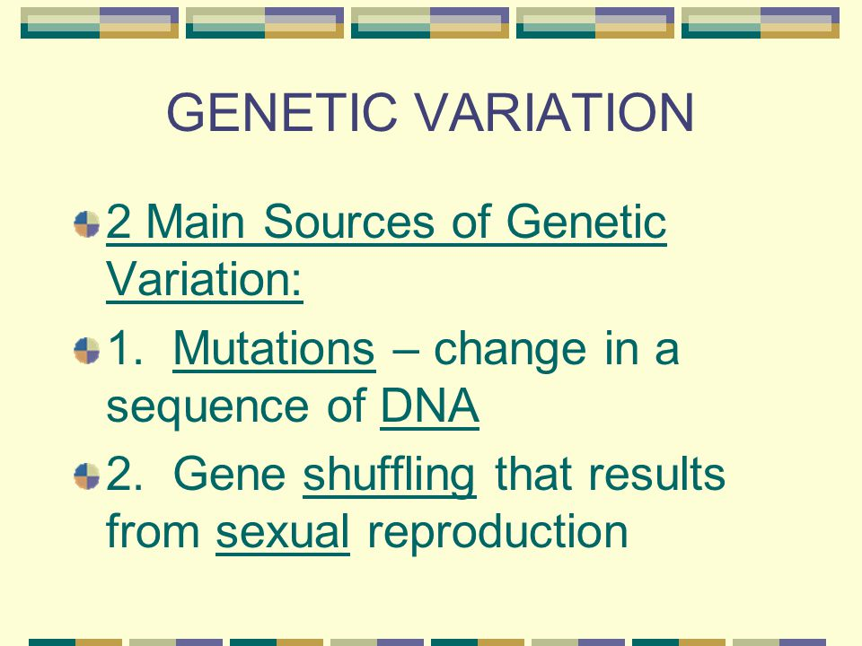 GENETIC VARIATION 2 Main Sources of Genetic Variation: