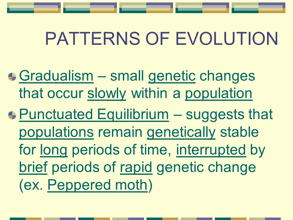 PATTERNS OF EVOLUTION Gradualism – small genetic changes that occur slowly within a population.