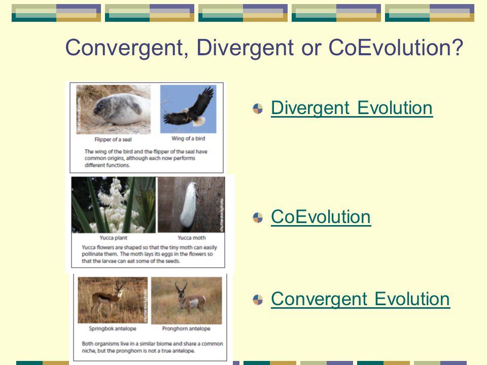 Convergent, Divergent or CoEvolution
