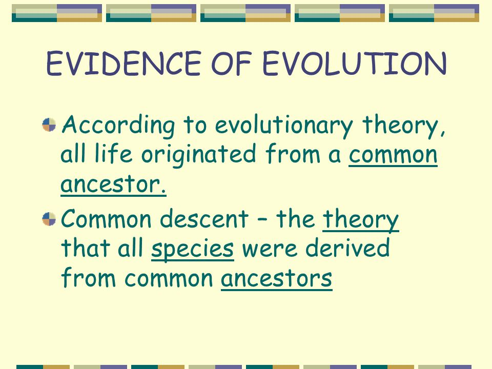 EVIDENCE OF EVOLUTION According to evolutionary theory, all life originated from a common ancestor.