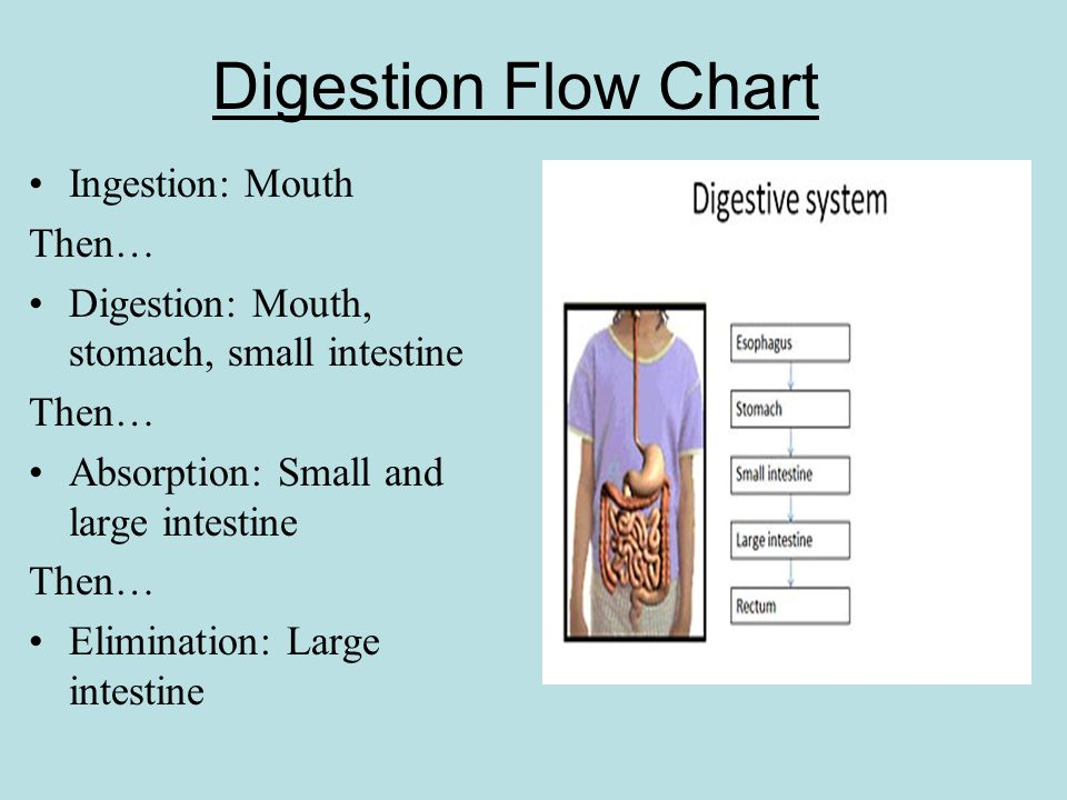human digestive system essay example The digestive system the digestive system is made up of the digestive tract—a series of hollow organs joined in a long carbohydrates, for example.