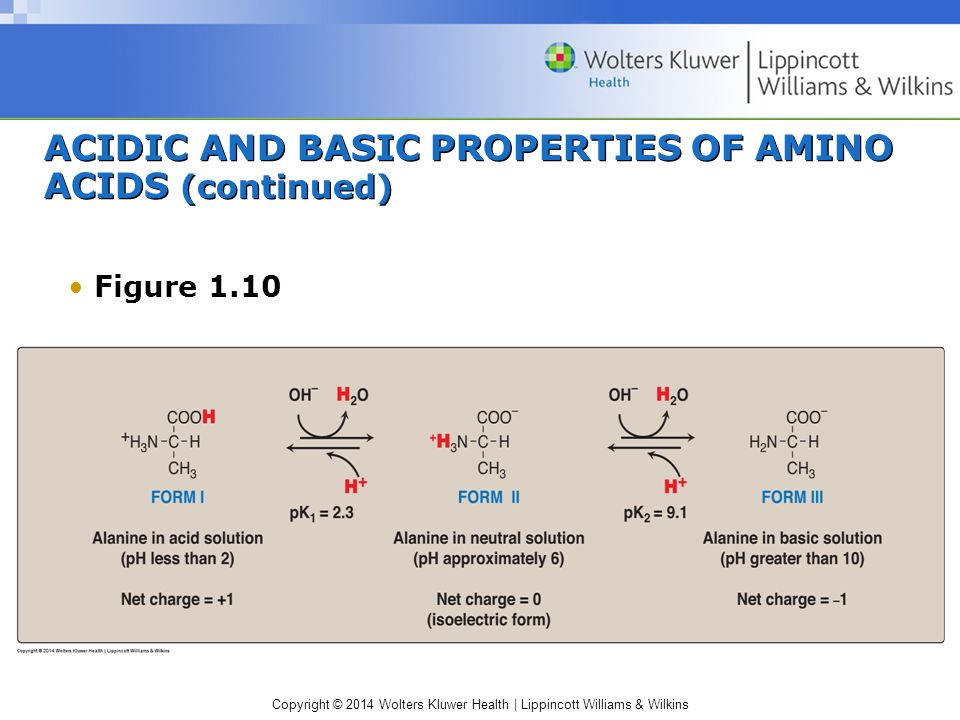ACIDIC AND BASIC PROPERTIES OF AMINO ACIDS (continued)