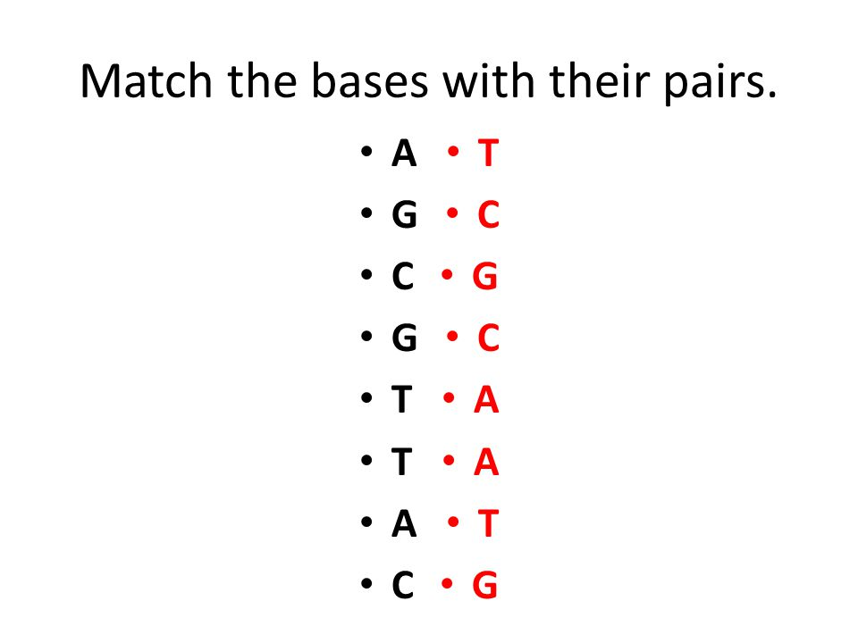 Match the bases with their pairs.