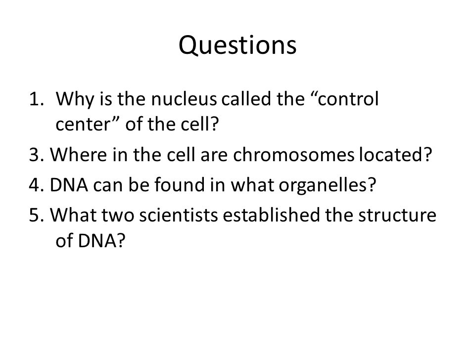 Questions Why is the nucleus called the control center of the cell
