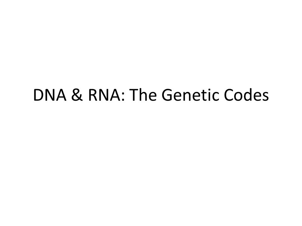 DNA & RNA: The Genetic Codes