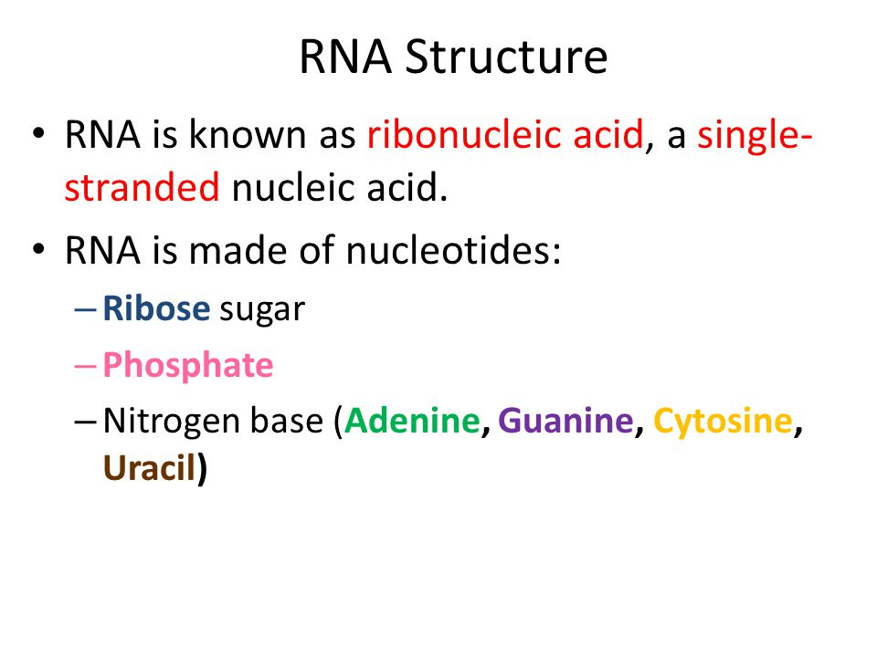 RNA Structure RNA is known as ribonucleic acid, a single-stranded nucleic acid. RNA is made of nucleotides: