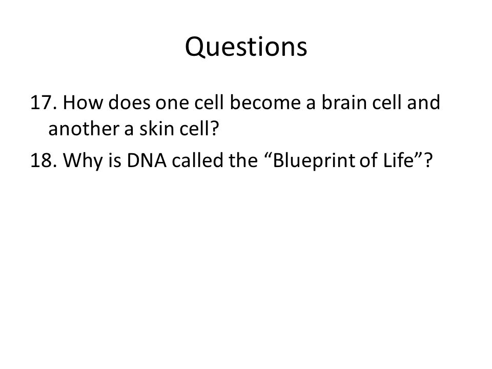 Questions 17. How does one cell become a brain cell and another a skin cell.