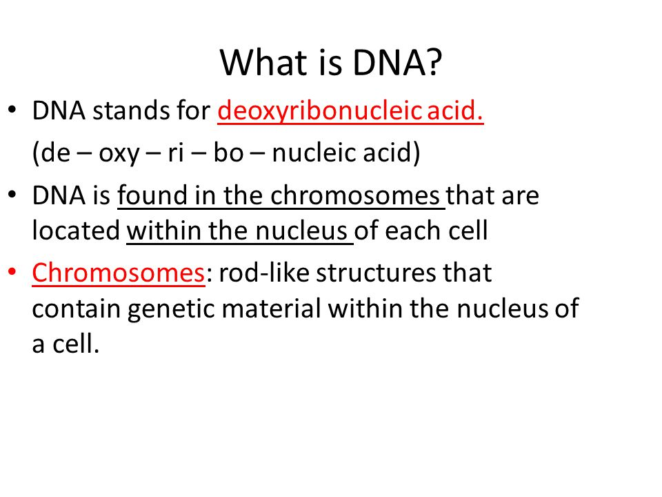 What is DNA DNA stands for deoxyribonucleic acid.