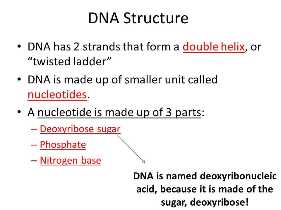 DNA Structure DNA has 2 strands that form a double helix, or twisted ladder DNA is made up of smaller unit called nucleotides.
