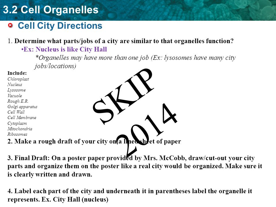 Eukaryotic: Plant and Animal Cells: Organelles and their Functions ...