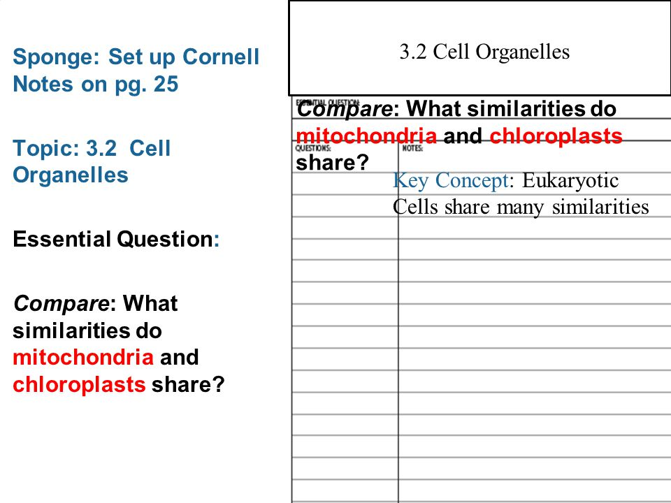 Worksheet on cell structure and organelles answer key