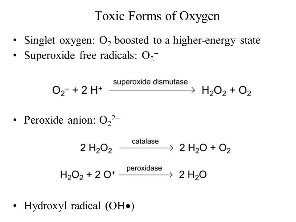 Toxic Forms of Oxygen Singlet oxygen: O2 boosted to a higher-energy state. Superoxide free radicals: O2