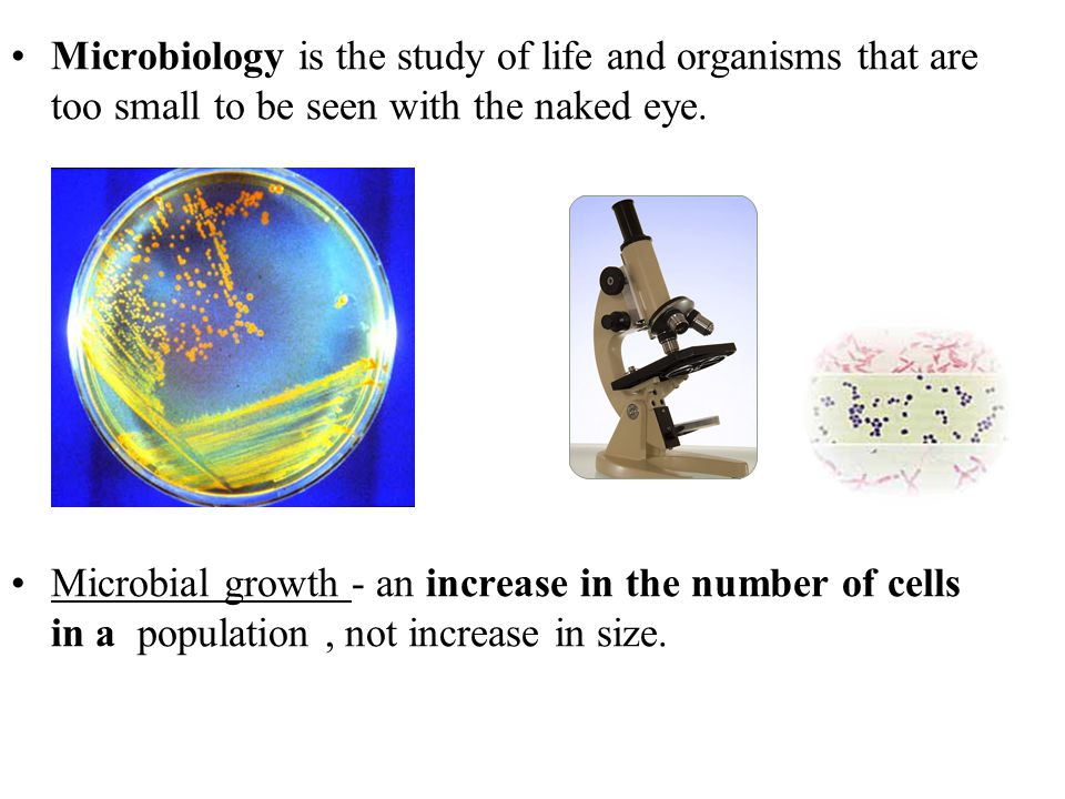 Microbiology is the study of life and organisms that are too small to be seen with the naked eye.