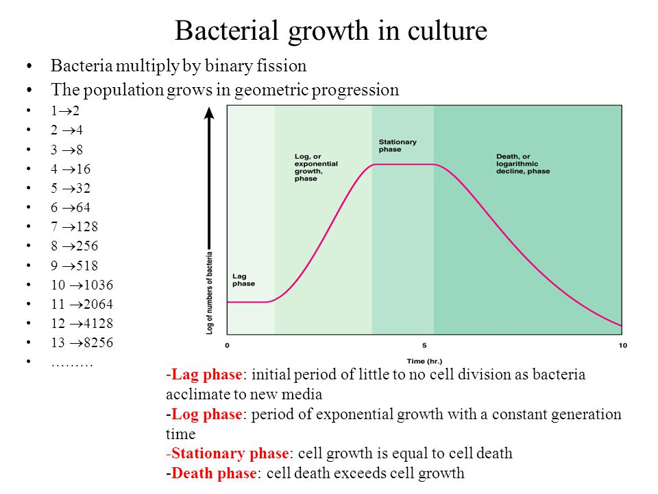 Bacterial growth in culture