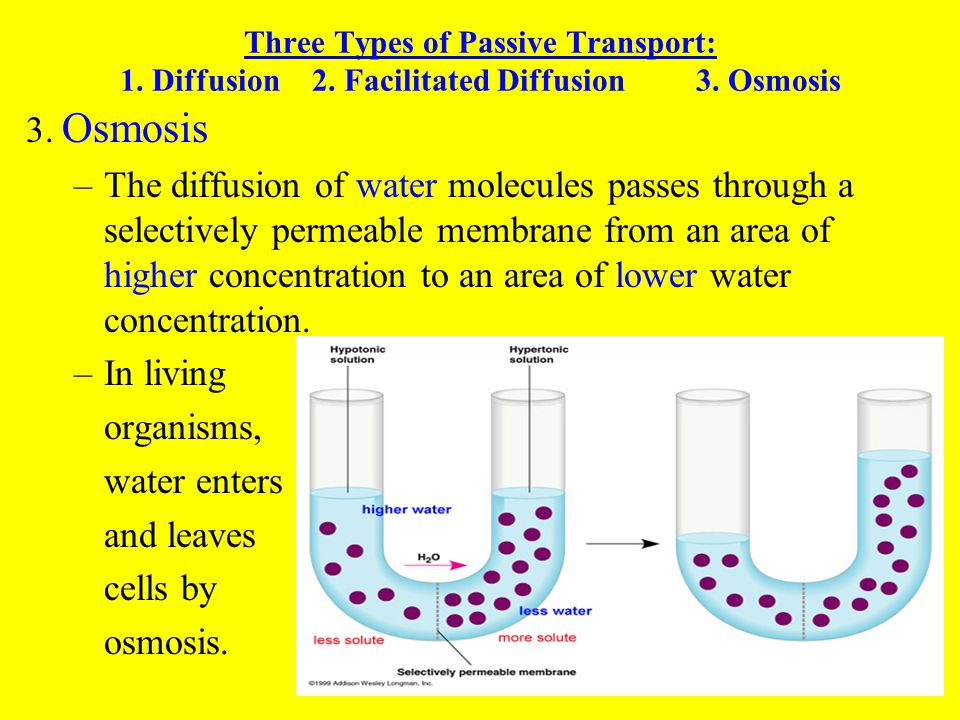 Importance of diffusion in living organisms essay help