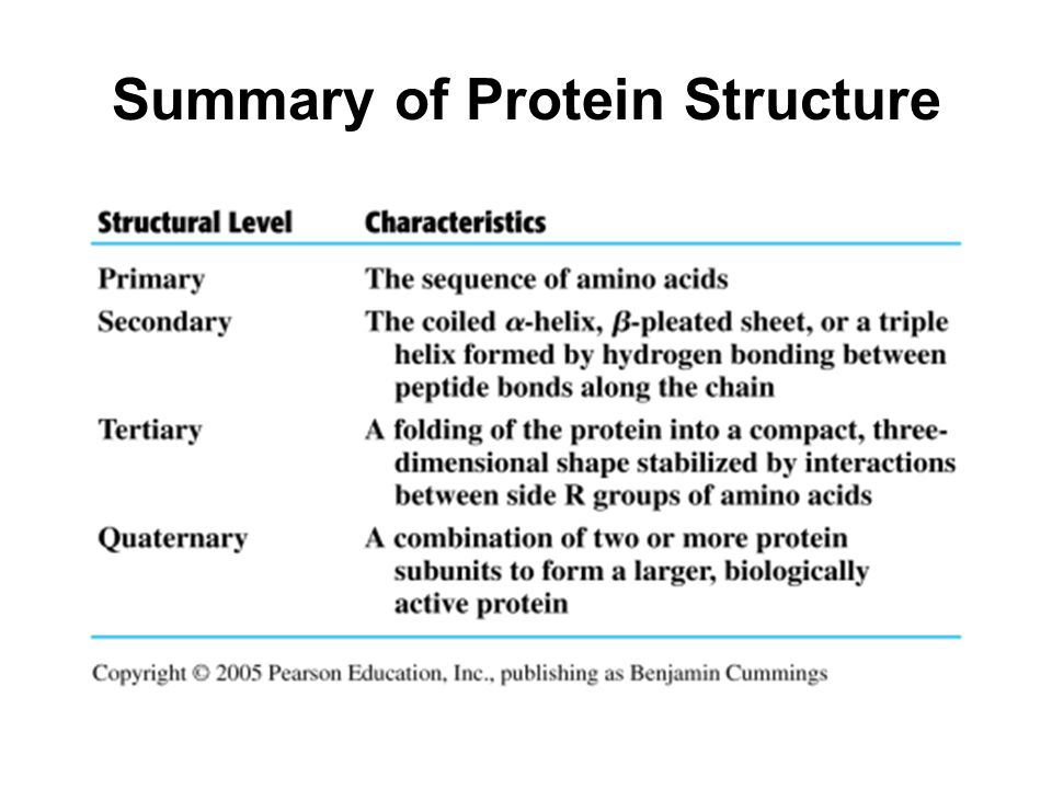 protein summary The human body can't store protein summary proteins are made up of chains of smaller chemicals called amino acids the human body cannot store amino acids.