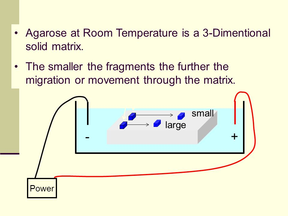 + - Agarose at Room Temperature is a 3-Dimentional solid matrix.