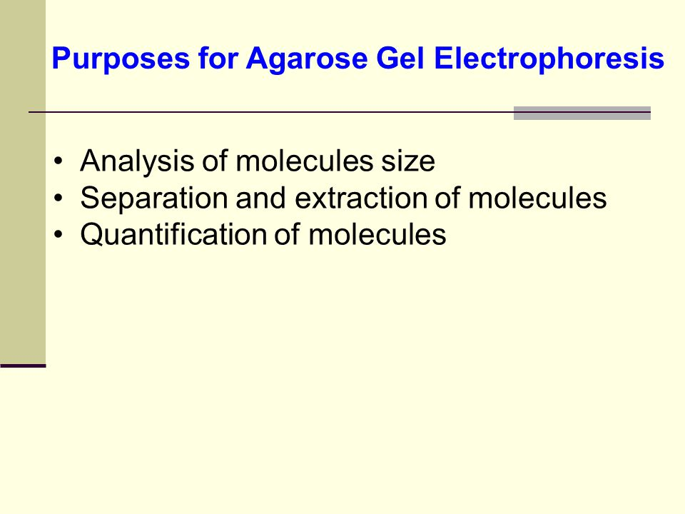 Purposes for Agarose Gel Electrophoresis