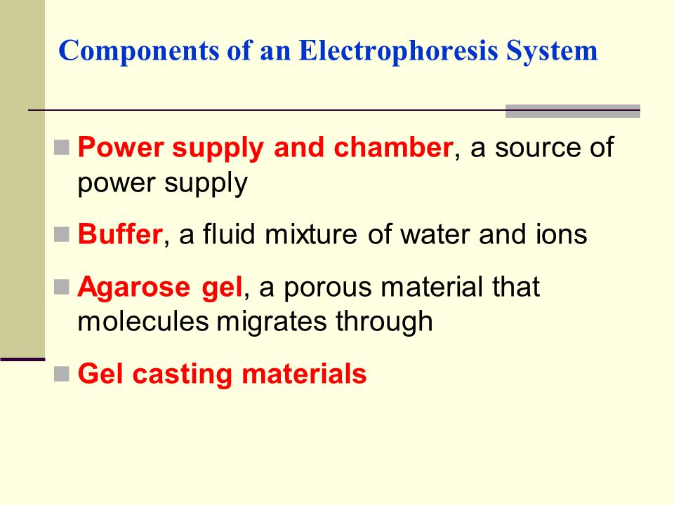 Components of an Electrophoresis System