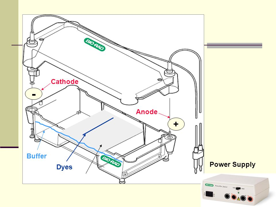 - + Cathode Anode Buffer Power Supply Dyes