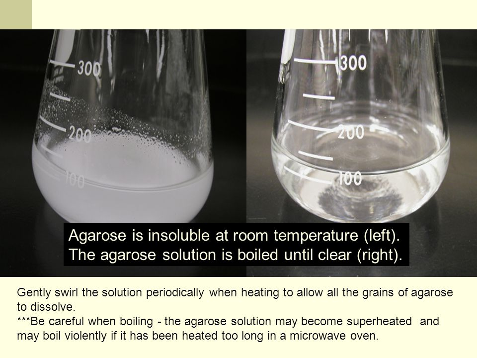 Melting the Agarose Agarose is insoluble at room temperature (left).