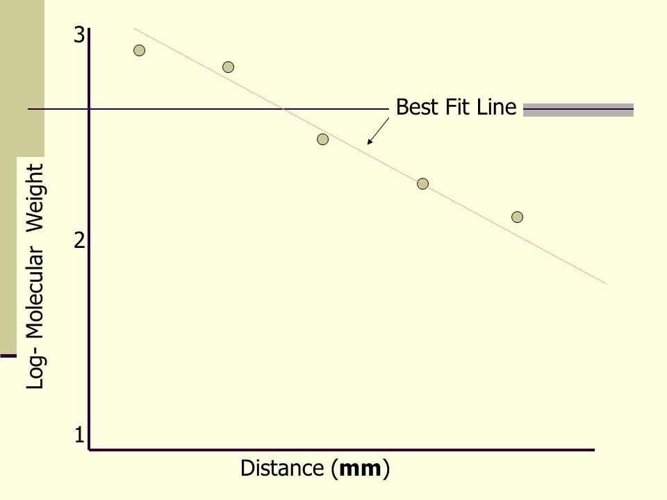 3 Best Fit Line 2 Log- Molecular Weight 1 Distance (mm)