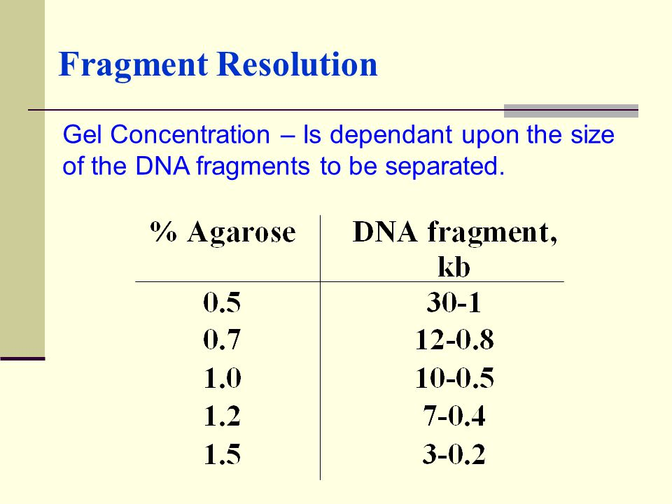 Fragment Resolution Gel Concentration – Is dependant upon the size of the DNA fragments to be separated.