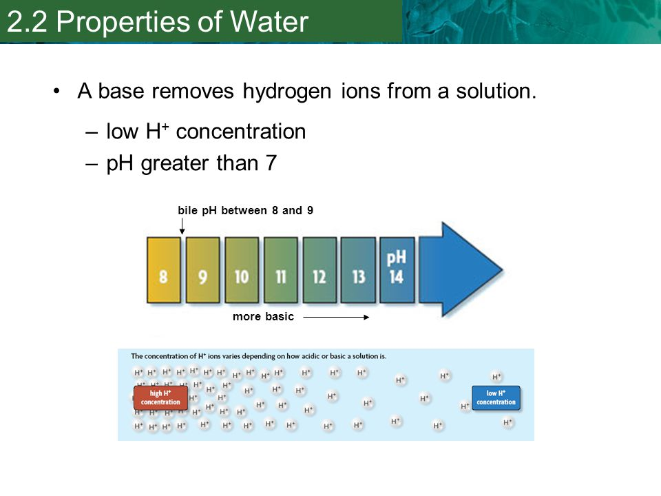2.2 Properties of Water A base removes hydrogen ions from a solution.