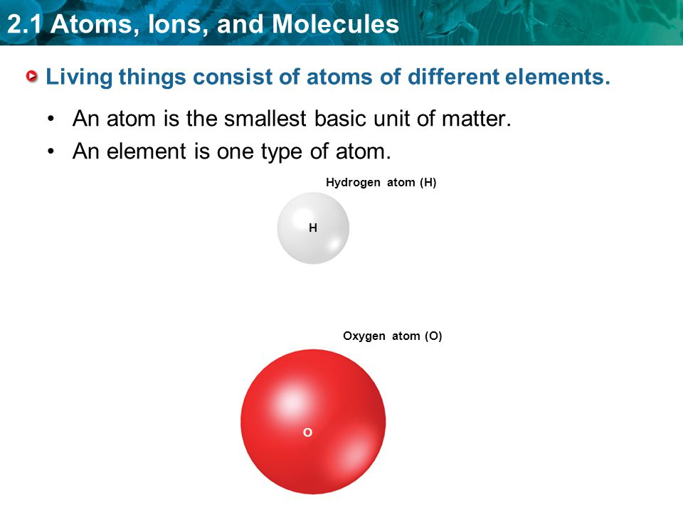 Living things consist of atoms of different elements.