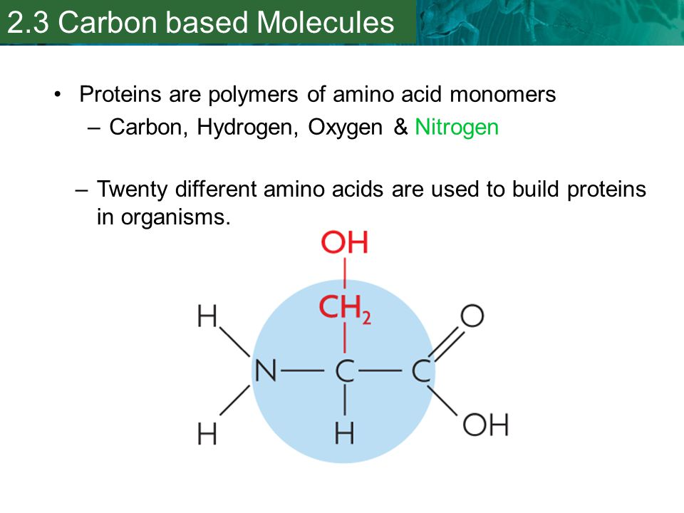 2.3 Carbon based Molecules