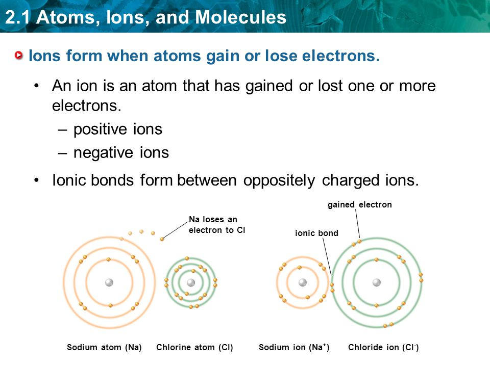 Ions form when atoms gain or lose electrons.
