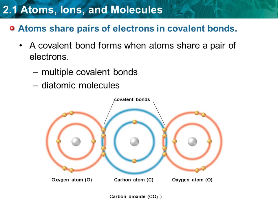 Atoms share pairs of electrons in covalent bonds.
