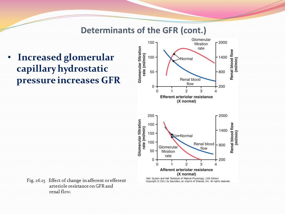 renal blood flow and gfr relationship marketing