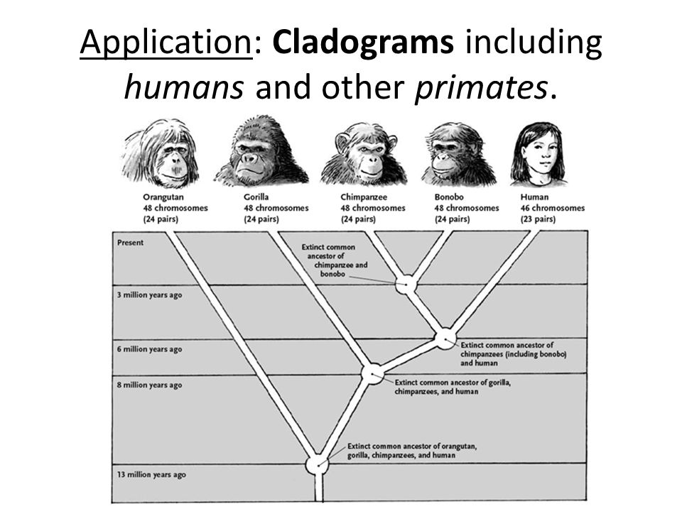 humans and other primates Humans and other primates are outliers among mammals for having nails instead of claws but how, when and why we transitioned from claws to nails has been an evolutionary head-scratcher now, new .